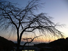 aichichildrenslandtree.jpg