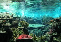 aquarium2012.jpg