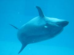 aquarium2012dolphin.jpg