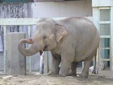 elephantathigashiyamazoo.jpg