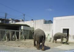 elephanthigashiyamazoo032012.jpg