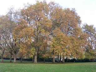 greenparkyellowtrees.JPG