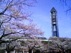higashiyama2010spring.jpg