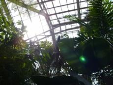 higashiyamabotanicalgardenconservatory3.JPG