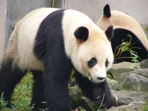 pandapart.JPG