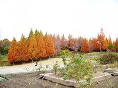 shikinomori2014.jpg