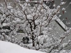 snow200802.JPG