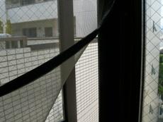 windowscreenl.JPG