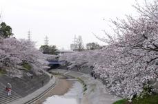 yamazakiriver2008g.JPG